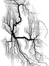 Seattle tree